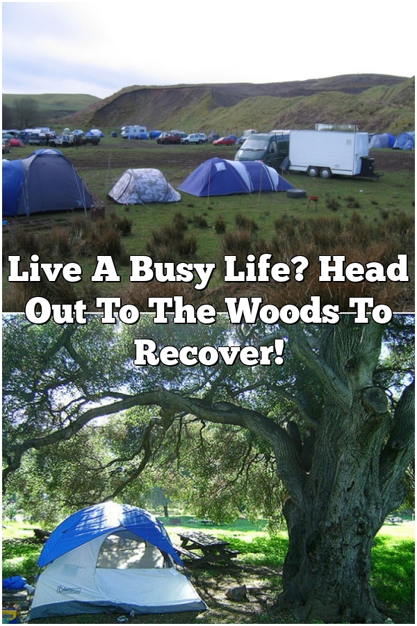 Live A Busy Life? Head Out To The Woods To Recover!